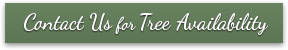 Contact Us for Tree Availability